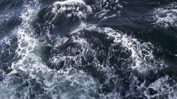 mar drake golfinho